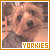 Animals: Yorkshire Terriers